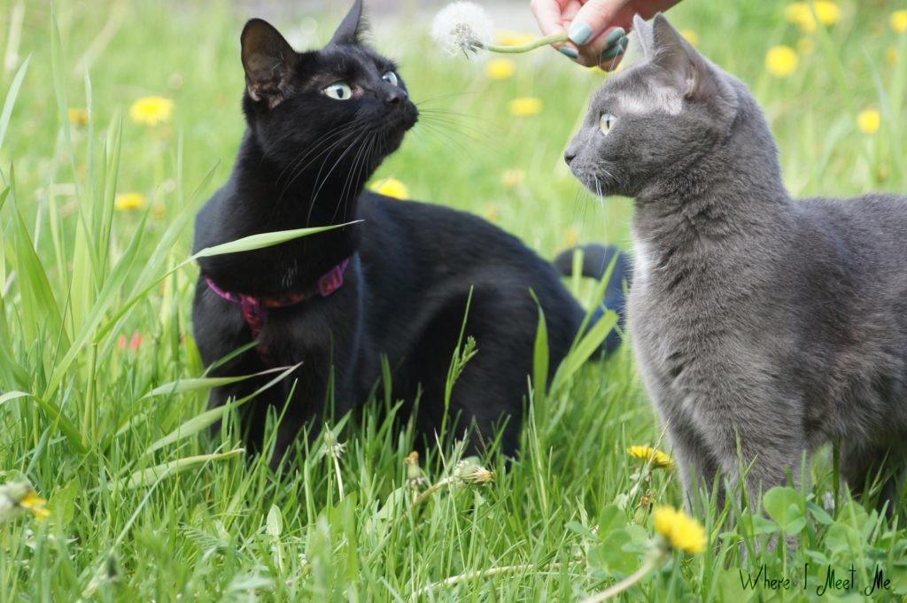 Блог Ксении Курилкиной whereimeetme.com | C днем котиков! | Котофотосессия