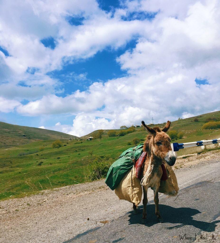 Блог Ксении Курилкиной whereimeetme.com | Еще не были в Армении? Лайфхаки и застолья. | Ослик